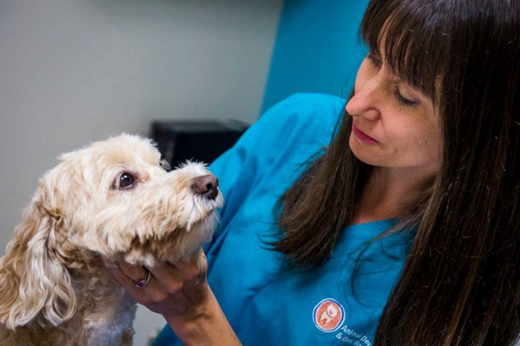 ADOS Veterinary dentist 1024x683 - FAQ