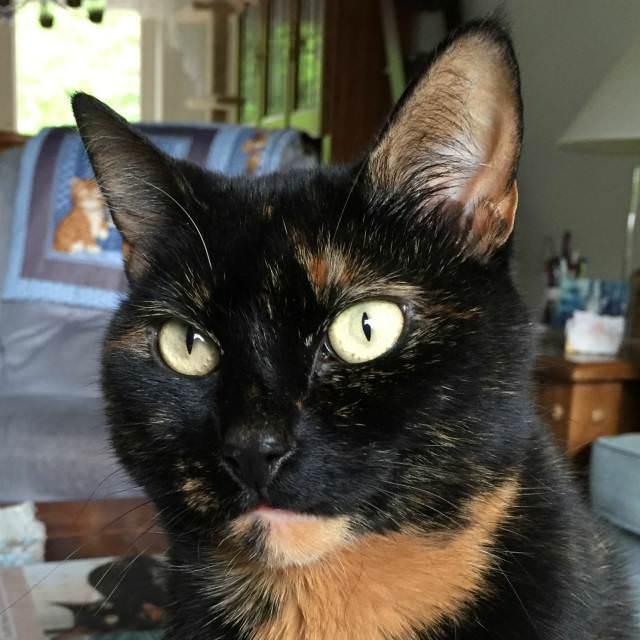 IMG_4574 edited-animaldentalspecialist-v1